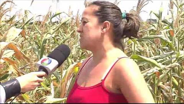 Jornal do Estado – Seca afeta produção de milho do estado – A8 ...
